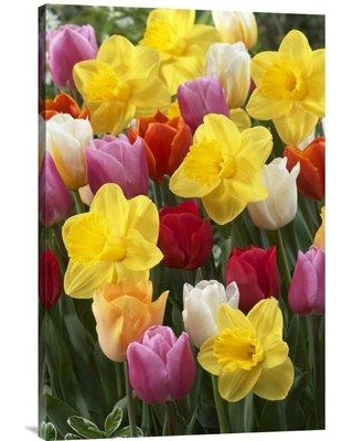 """East Urban Home 'Daffodil Lucky Number Variety and Tulip Flowers' Photographic Print EAAC8056 Size: 30"""" H x 20"""" W Format: Wrapped Canvas"""