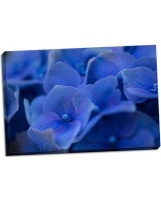 August Grove 'Hydrangea Blues II' Photographic Print on Wrapped Canvas BF045662