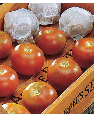 Tomato, Burpee's Long-Keeper 1 Pkt. (30 seeds)