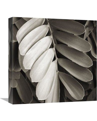 "East Urban Home 'Tropical Plant I' Photographic Print on Canvas ESUN1721 Size: 18"" H x 18"" W"