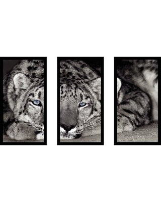 "East Urban Home 'Snow Leopard Sanctuary' Framed Photographic Print Multi-Piece Image on Glass EABM1953 Size: 25.5"" H x 40.5"" W"