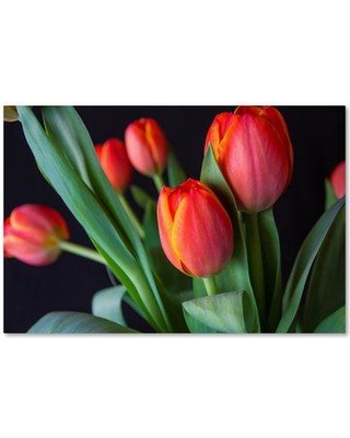 """Trademark Art 'Spring Tulips' Graphic Art Print on Wrapped Canvas ALI16223-C Size: 22"""" H x 32"""" W"""