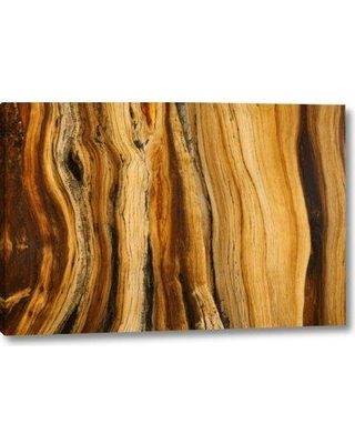 """Millwood Pines 'Ca White Mts Wilderness Bristlecone Pine Wood' Graphic Art Print on Wrapped Canvas BI152340 Size: 21"""" H x 32"""" W x 1.5"""" D"""