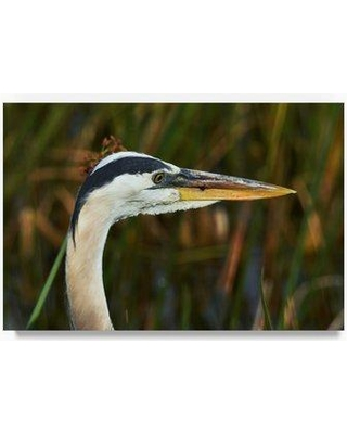 """Trademark Art 'Graceful Blue Heron' Photographic Print on Wrapped Canvas ALI23376-C Size: 22"""" H x 32"""" W x 2"""" D"""