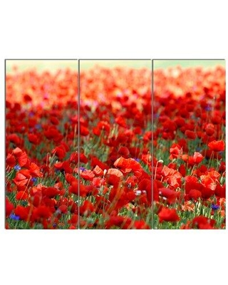 "Design Art 'ThickPoppy Flower Field' 3 Piece Photographic Print on Wrapped Canvas Set, Canvas & Fabric in Red, Size Medium 25""-32"" 