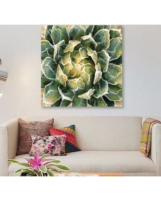 """East Urban Home 'Succulent III' Graphic Art Print on Canvas ERBR1149 Size: 37"""" H x 37"""" W x 1.5"""" D"""