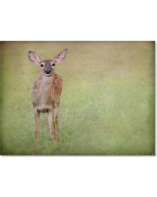 "Trademark Art 'Listening Ears White Tailed Fawn' Photographic Print on Wrapped Canvas ALI13879-C Size: 18"" H x 24"" W"