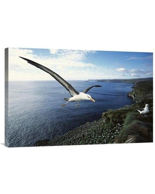 """East Urban Home 'Campbell Albatross Coming in to Land Campbell Island New Zealand' Photographic Print EAUB4637 Size: 20"""" H x 30"""" W Format: Wrapped Canvas"""