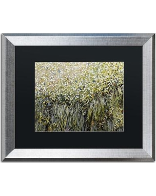 """Trademark Fine Art 'Barnacles' Framed Graphic Art on Canvas ND0116-S1 Size: 16"""" H x 20"""" W x 0.5"""" D Matte Color: Black"""