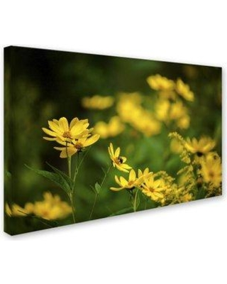 "Trademark Art 'September Wildflowers' Photographic Print on Wrapped Canvas KS01328-C Size: 22"" H x 32"" W x 2"" D"