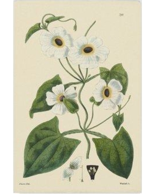 "Gracie Oaks 'White Curtis Botanical IV' Graphic Art Print on Wrapped Canvas GCEO1738 Size: 24"" H x 16"" W x 2"" D"