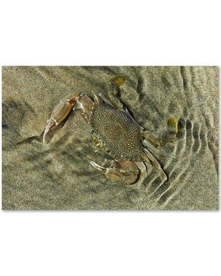 """Trademark Fine Art 'Crabs' Photographic Print on Wrapped Canvas, Canvas & Fabric, Size 12"""" H x 19"""" W   Wayfair ALI18641-C1219GG"""