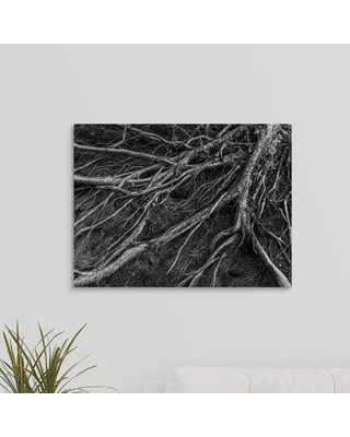 """Ebern Designs 'Roots' Photographic Print on Canvas X111013293 Size: 18"""" H x 24"""" W x 1.5"""" D"""