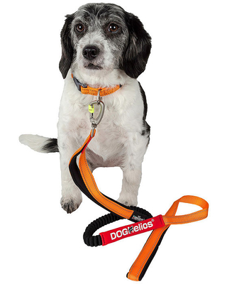 Dog Helios Easy-Tension Sporty Durable Pet Dog Leash And Collar, One Size , Orange
