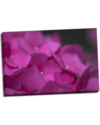August Grove 'Pink Hydrangeas III' Photographic Print on Wrapped Canvas BI045660