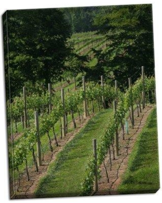 August Grove 'Vineyard II' Photographic Print on Wrapped Canvas BF050354