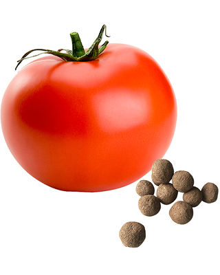 Seed-Balls.com Fruits and Vegetables earthy - Ace 55 Tomato Seed Ball - Set of 15