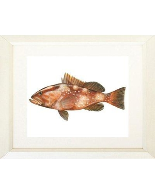 "Breakwater Bay 'Red Grouper Fish' Framed Acrylic Painting Print BKWT4978 Size: 16"" H x 20"" W Matte Color: Cream Format: White Framed"