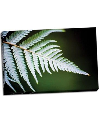 Bay Isle Home 'Silver Tree Fern II' Photographic Print on Wrapped Canvas BF051123