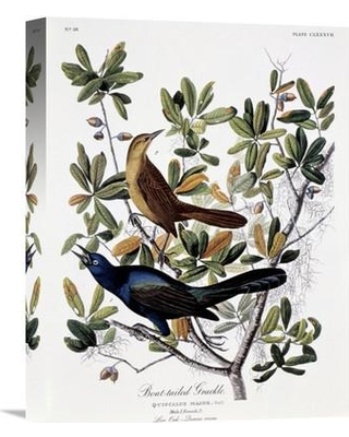 """Global Gallery 'Boat Tailed Grackle Male and Female' by John James Audubon Painting Print on Wrapped Canvas GCS-276581--142 Size: 22"""" H x 16.8"""" W x 1.5"""" D"""