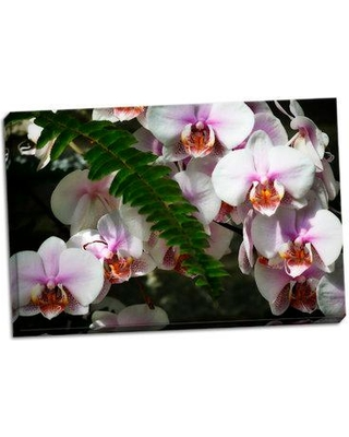 Bay Isle Home 'Moth Orchids II' Photographic Print on Wrapped Canvas BI053291