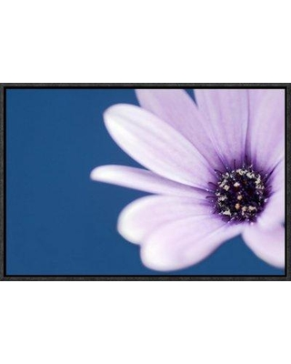"East Urban Home 'Cape Marguerite Daisy' Photographic Print EAAC8536 Size: 16"" H x 24"" W Format: Wrapped Canvas"