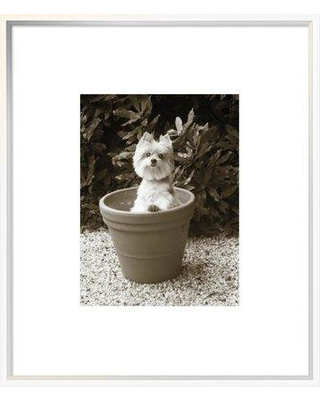 """East Urban Home 'In the Garden' Photographic Print EUHE8206 Format: Collins White Framed Matte Color: Bright White Size: 27.6"""" H x 23.6"""" W"""