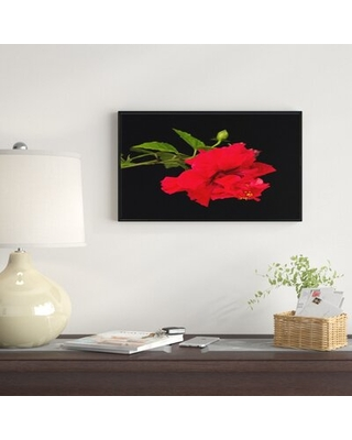 "'Bright Red Hibiscus on Black' Graphic Art Print on Wrapped Canvas East Urban Home Size: 30"" H x 62"" W x 1.5"" D"