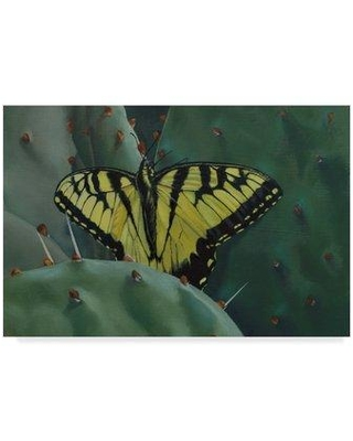 "Trademark Fine Art 'Butterfly Cactus' Graphic Art Print on Wrapped Canvas ALI33091-CGG Size: 30"" H x 47"" W x 2"" D"