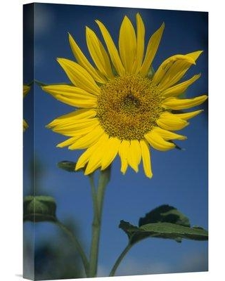 """East Urban Home New Mexico 'Common Sunflower Flower' Photographic Print on Wrapped Canvas NNAI3982 Size: 18"""" H x 12"""" W"""