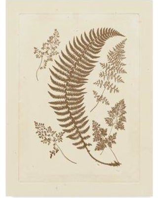 """East Urban Home 'Sepia Ferns IV' Acrylic Painting Print on Wrapped Canvas W000993159 Size: 47"""" H x 35"""" W x 2"""" D"""