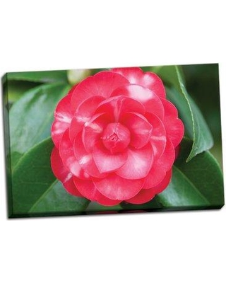 Ebern Designs 'Camellia Flower 1' Photographic Print on Wrapped Canvas BF046278
