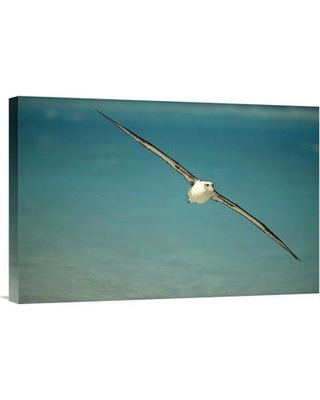 "East Urban Home 'Laysan Albatross Flying Towards Breeding Grounds Midway Atoll Hawaii' Photographic Print EAUB5150 Size: 16"" H x 24"" W Format: Wrapped Canvas"