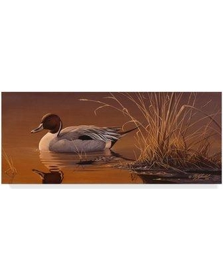 "Trademark Art 'Amber Light Pintail' Graphic Art Print on Wrapped Canvas ALI33645-CGG Size: 10"" H x 24"" W x 2"" D"