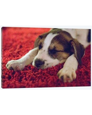 """East Urban Home 'Puppy Sleeping Minneapolis Minnesota' Graphic Art Print on Wrapped Canvas EBHS0293 Size: 18"""" H x 26"""" W x 0.75"""" D"""