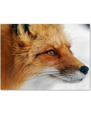 Trademark Art Red Fox Photographic Print On Wrapped Canvas 1x00123 C Size