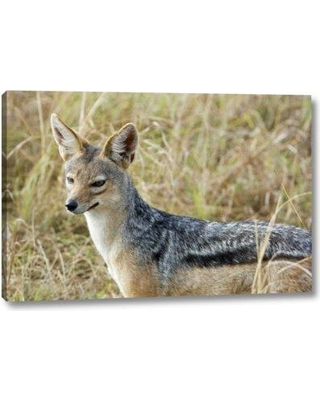 """World Menagerie 'Kenya Masai Mara Black-Backed Jackal Close-up' Photographic Print on Wrapped Canvas BF152707 Size: 21"""" H x 32"""" W x 1.5"""" D"""