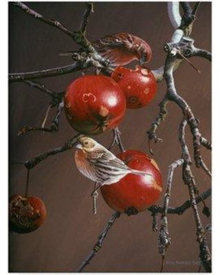 "Trademark Art 'Winter Apples' Graphic Art Print on Wrapped Canvas ALI32592-CGG Size: 32"" H x 24"" W x 2"" D"