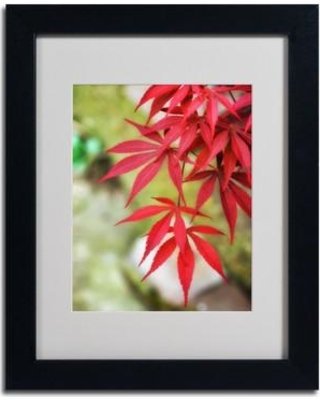 """Trademark Art """"Japanese Maple"""" by Philippe Sainte-Laudy Matted Framed Photographic Print PSL0198-B1114MF / PSL0198-B1620MF Size: 14"""" H x 11"""" W x 0.5"""" D Frame Color: Black"""