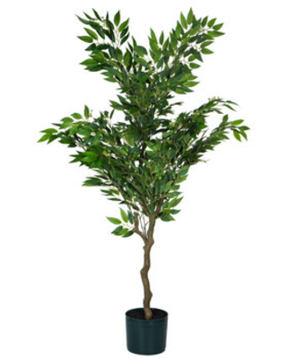 Potted Ruscus Tree