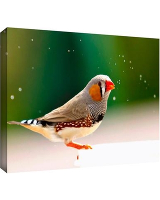 "ArtWall 'Zebra Finch' by Lindsey Janich Photographic Print on Wrapped Canvas 0 Size: 16"" H x 18"" W"