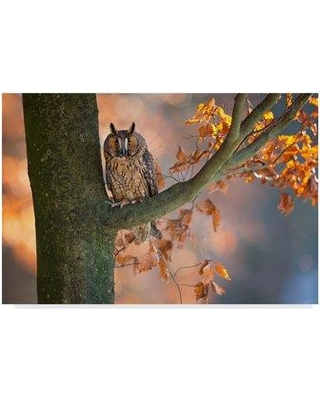 "Trademark Fine Art 'Eared Owl' Photographic Print on Wrapped Canvas 1X06771-C Size: 16"" H x 24"" W x 2"" D"