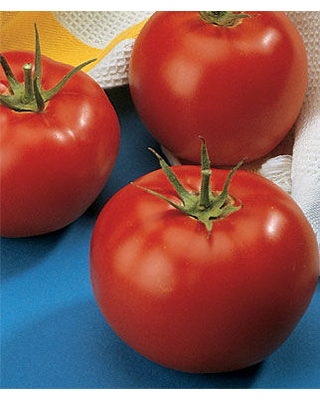 Tomato, Burpees Early Pick VF Hybrid 1 Pkt. (50 seeds)