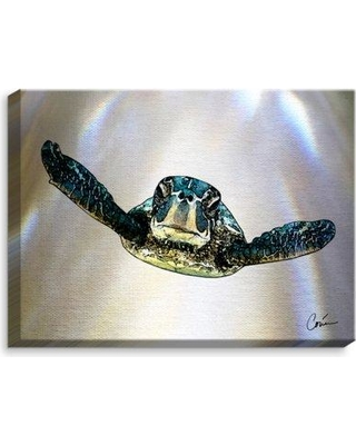 """DiaNocheDesigns 'Sea Turtle I' by Corina Bakke Painting Print on Wrapped Canvas CAN-CorinaBakkeSeaTurtleI Size: 18"""" H x 24"""" W x 1.5"""" D"""