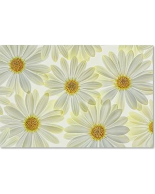 """August Grove 'Daisy Flowers' Photographic Print on Wrapped Canvas AGRV9986 Size: 16"""" H x 24"""" W x 2"""" D"""