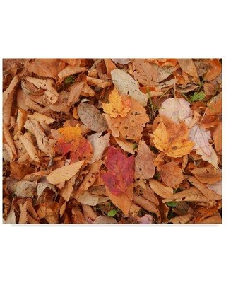 """Millwood Pines 'Pile of Leaves' Photographic Print on Wrapped Canvas MIPN1760 Size: 24"""" H x 32"""" W x 2"""" D"""