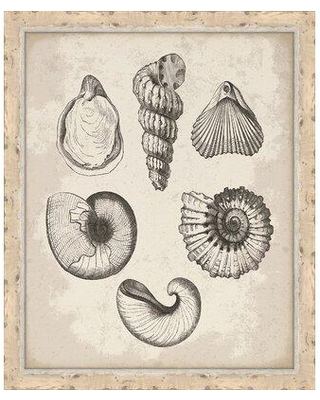 Don T Miss These Deals On Melissa Van Hise Antique Shells Iv Framed Graphic Art Print Paper In Brown Gray Size Medium 25 32 Wayfair Ip14641