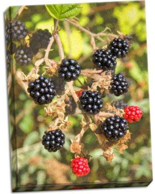 August Grove 'Geroge's Wild Berries' Photographic Print on Wrapped Canvas BF053417