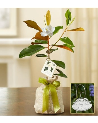 Magnolia Tree for Sympathy Small with Plaque
