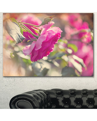 Designart Beautiful Pink Rose Flowers Floral Canvas Art Print, One Size , Pink
